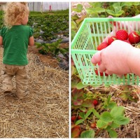 To Mother Boldly: a Tale of Two Strawberry Pickings