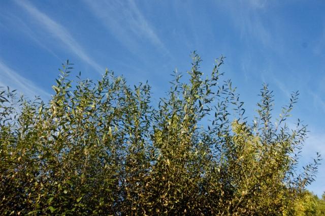 ten on ten, autumn